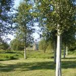 Arboretum-150x150
